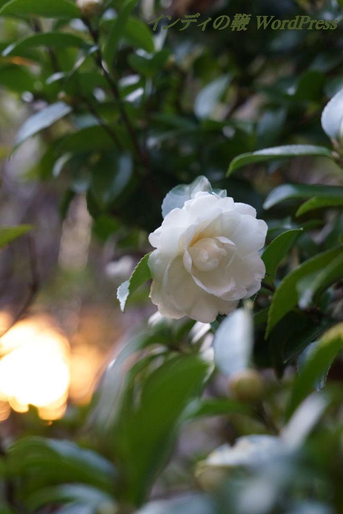 snap-flower20181114