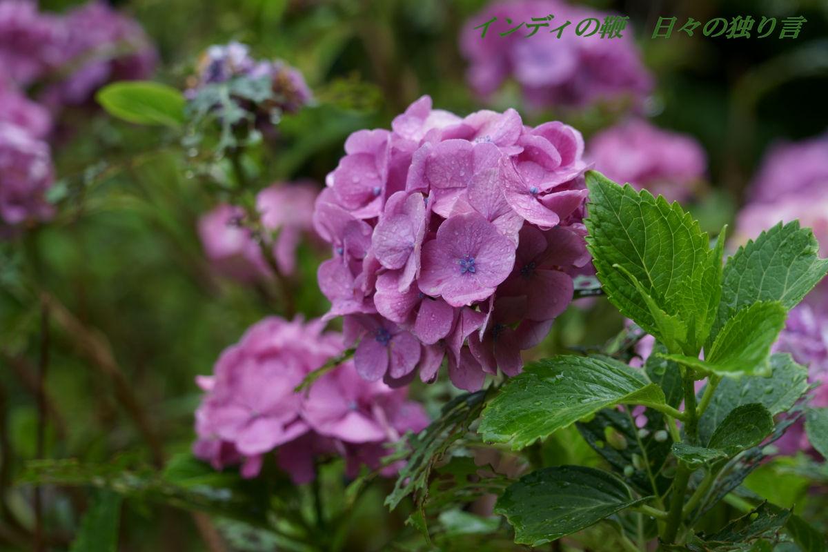 snap-flower20190628